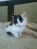 Котенка в хорошие руки